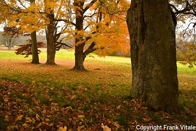 Fall Colors at Minute Man NHP