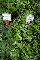 Central Market begins its Herb Fest to mark the coming of spring at its Greenville Avenue store in Dallas, Texas, Monday, March 24, 2008...PHOTO/ MATT NAGER