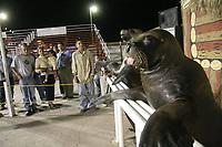 Sasta y Toto son los nombre de dos juguetones lobos marinos en espera de los visitantes al aqua teatro.