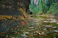 West Fork Oak Creek<br />