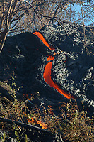 Small lava flow burns brush high up the Pali Hawaii, USA Volcanoes National Park, Big Island, Hawaii, USA, Pacific Ocean