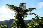 Orchid Island (蘭嶼), Taiwan -- Palm tree.