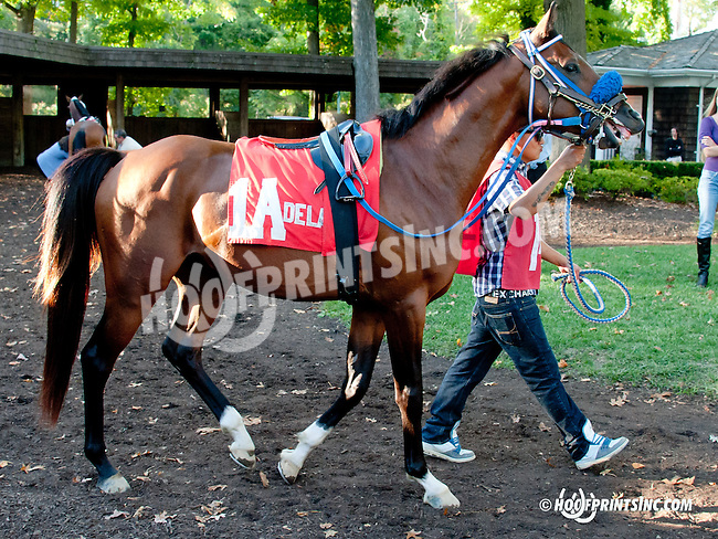 Burning Fleet before The Delaware Park Arabian Juvenile Championship (gr 3) at Delaware Park on 9/28/13