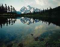 Mount Shuksan reflected in Picture Lake with grassy foreground. Mount Baker Wilderness Area, North Cascades.