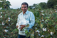 Fairtrade Cotton Producer Narendra Patidar, 49, clutches a bunch of cotton in his farm in Karhi, Khargone, Madhya Pradesh, India on 12 November 2014. Narendra employs 5 labourers at his farm and pays them 5 rupees per kilogram per worker while each worker can pick up to 40kg per day. He joined Fairtrade because he believes it's good for the community. Photo by Suzanne Lee for Fairtrade