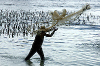 FISHERMAN CASTING HIS NET CHUUK, MICRONESIA, PACIFIC