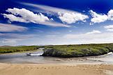 MEXICO, Baja, Magdalena Bay, Pacific Ocean, a view of the river and mangroves near Magdalena bay