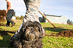 Carl Doucette's dog Starr watches as Carl and Clint spread Irish Moss (Chondrus crispus) out to dry on the lawn on Prince Edward Island, Canada. The Irish Moss industry in Prince Edward island has been in decline for years, but with the emergence of new markets for the seaweed, there might be new hope for the few remaining mossers on the island. Irish Moss is harvested for its' carrageenan, an extract that is used as a stabilizing agent in many food products.