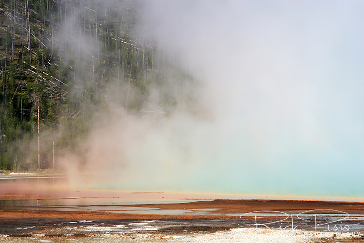 Steam rises from the Grand Prismatic Spring in Yellowstone's Midway Geyser Basin. Grand Prismatic is the largest hot spring in Yellowstone, and is considered to be the third largest in the world. The colors begin with a deep blue center followed by pale blue. Green algae forms beyond the shallow edge. Outside the scalloped rim a band of yellow fades into orange. Red then marks the outer border. Steam often shrouds the spring which reflects the brilliant colors.