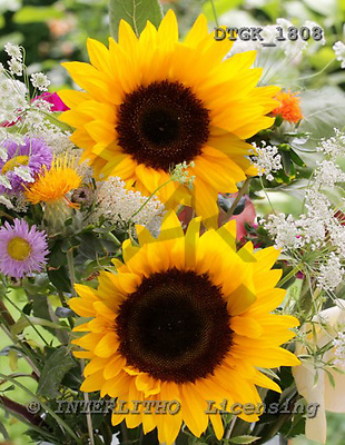 Gisela, FLOWERS, photos, DTGK1808,#f# Blumen, flores, retrato