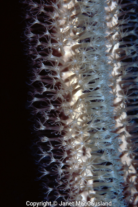 Coral polyps extended in daytime;