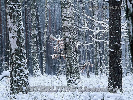 Marek, CHRISTMAS LANDSCAPES, WEIHNACHTEN WINTERLANDSCHAFTEN, NAVIDAD PAISAJES DE INVIERNO, photos+++++,PLMP064-00767,#xl#
