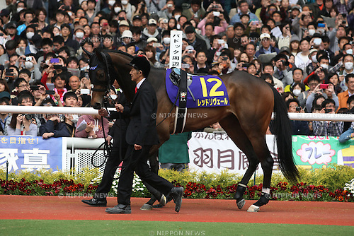 Red Reveur,<br /> APRIL 13, 2014 - Horse Racing :<br /> Red Reveur is led through the paddock before the Oka Sho (Japanese 1000 Guineas) at Hanshin Racecourse in Hyogo, Japan. (Photo by Eiichi Yamane/AFLO)