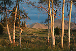Lima Peaks through aspen trees at sunset