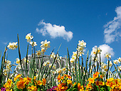 The Palm House hidden behind some daffodils and primulas at the Royal Botanic Gardens, Kew.