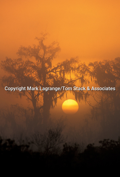 The sunrise in Louisiana's swamps are both eerie and beautiful. A touch of fog helps protect and shroud the mystery that felt is deep in the swamp.