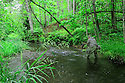 00416-029.07 Fishing: Fly fisherman is working small stream.  Trout, creek, brook, brown, cold water.