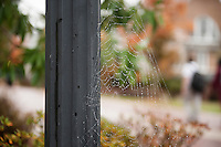 MSU Campus- Fall scenes - spider web<br />  (photo by Sarah Tewolde / &copy; Mississippi State University)
