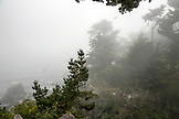 USA, California, Big Sur, Esalen, the Murphy House and coastling in the morning fog