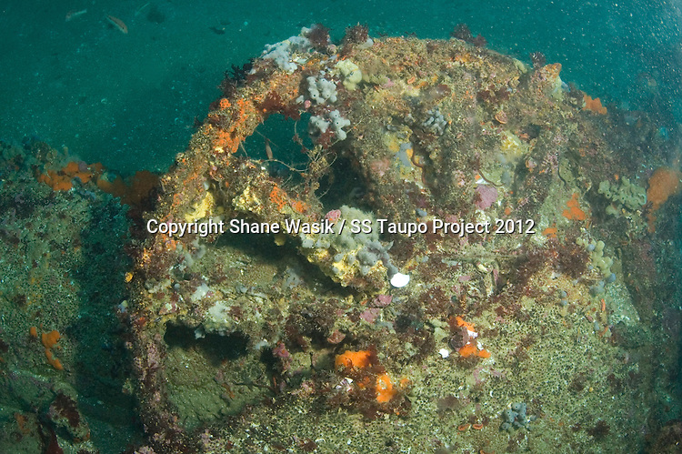 A flywheel on the wreck site of the SS Taupo. The wheel is located near the Donkey Boiler and is likely to be part of the machinery, perhaps auxiliary power. (Photo by Shane Wasik Photography)