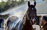 LOUISVILLE, KENTUCKY - APRIL 27: Omaha Beach, trained by Richard Mandella, gets a bath after exercising in preparation for the Kentucky Derby at Churchill Downs in Louisville, Kentucky on April 27, 2019. Scott Serio/Eclipse Sportswire/CSM