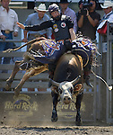 Kanin Asay, from Powell, WY., is bucked off by Einstein during the Xtreme Bull Riding Competition at the Kitsap County Fair and Stampede  held Aug. 26 to Aug. 30, 2009 in Silverdale, WA. Jim Bryant Photo. All Right Reserved. © 2009