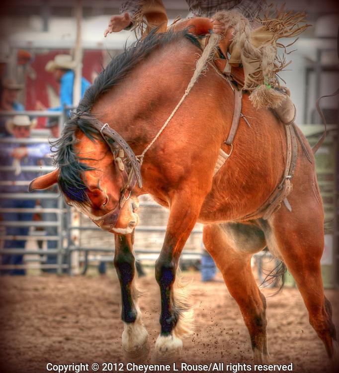 Buckin' Brocno with rider at Rodeo - Arizona