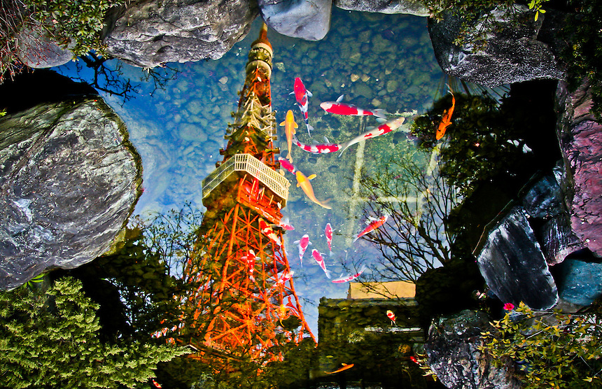 Tokyo tower is reflected in a pool of Koi carp (FYI- straight shot no Photoshop).