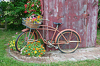 63821-22216 Old bicycle with flower basket next to old outhouse garden shed.  Red Wing Begonias, Zinnias, Snapdragons  (Antirrhinum sp.)  Marion Co., IL
