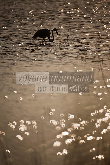 France/13/Bouches du Rhone/Camargue/Parc Naturel Régionnal de Camargue/Arles/Route de FIélouse: Etang de Vaccarès - Flamants roses