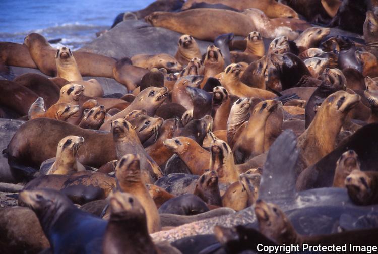 CA sea lions and elephant seals