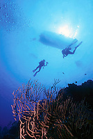 MARINE LIFE: BOAT, REEFS &amp; DIVERS<br /> Divers heading to boat on reef<br /> Underwater shot of divers, diver on left with underwater photography equipment.