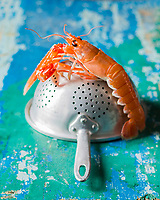 Gastronomie: Langoustines //  Gastronomy: Norway lobster - Stylisme : Valérie LHOMME