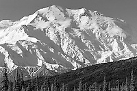 The massive face of Mt. McKinley rises dramatically in Denali National Park, Alaska.