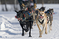 2007 Open North American Championship sled dog race (the world's premier sled dog sprint race) is held annually in Fairbanks, Alaska.