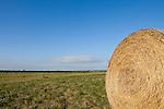 Heu, Heuernte, hay, hay harvest, Weiden, Burgenland, Austria, Österreich