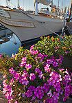 Port Townsend, Washington:<br /> Flowers on the dock at the Port Townsend Marina on Puget Sound