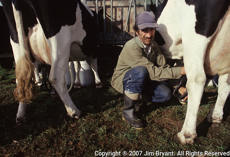 Dairy farming is one of the main businesses on Terceira, Azores. A farme  milks his cows for milk that will be deposited at a village dairy cooperative. Far out in the Atlantic Ocean, some 850 miles off the western coast of Lisbon, Portugal lies the 425-mile long archipelago of the Azores. (Jim Bryant Photo)..