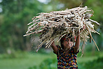 A girl carries firewood in Kunderpara, a village on an island in the Brahmaputra River in northern Bangladesh.