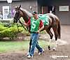 Yuzuru before The Forever Together Stakes at Delaware Park on 9/11/13