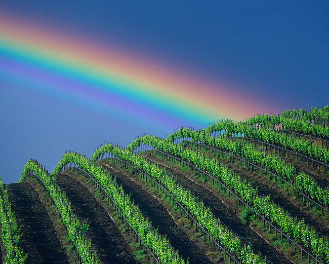 Vineyard Rainbow