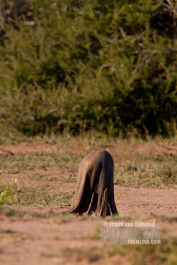 Rhinoceros scrath-post..Winter, May 2009..Hluhluwe-Imfolozi Game Reserve, Kwazulu Natal, South Africa.