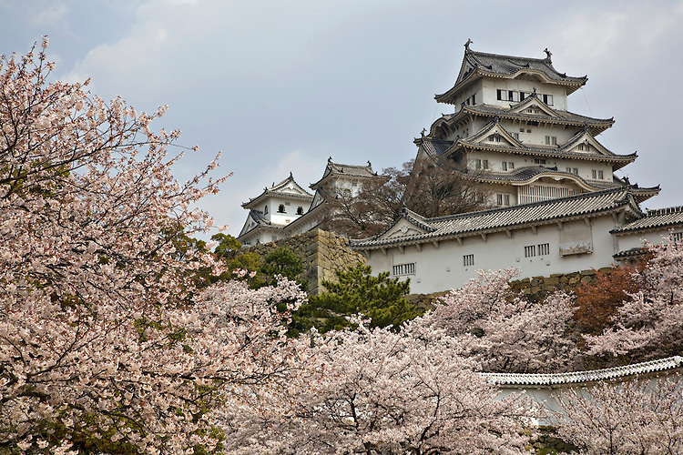 Himeji Castle among cherry blossoms in spring