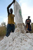 "Afrika Mali Helvetas Biobaumwolle Projekt - Baumwollernte bei Biofarmer Bakary Bagayoko 36 Jahre alt 5 Kinder 1/2 ha cotton aus Dorf Faragouaran | .Western Africa Mali .| [ copyright (c) Joerg Boethling / agenda , Veroeffentlichung nur gegen Honorar und Belegexemplar an / publication only with royalties and copy to:  agenda PG   Rothestr. 66   Germany D-22765 Hamburg   ph. ++49 40 391 907 14   e-mail: boethling@agenda-fototext.de   www.agenda-fototext.de   Bank: Hamburger Sparkasse  BLZ 200 505 50  Kto. 1281 120 178   IBAN: DE96 2005 0550 1281 1201 78   BIC: ""HASPDEHH"" ,  WEITERE MOTIVE ZU DIESEM THEMA SIND VORHANDEN!! MORE PICTURES ON THIS SUBJECT AVAILABLE!!  ] [#0,26,121#]"