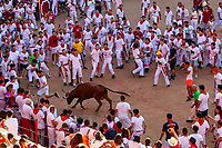 Europe,Spain,Pamplona,San Firmin festival 2018, Encierro,  small brave cows are in fight with the runners in the plaza de Toros