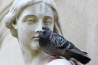 Pigeon perched on Queen Anne Statue at St Paul's Cathedral in London, England