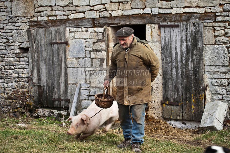 Europe/Europe/France/Midi-Pyrénées/46/Lot/Env de Lalbenque: Cavage  avec le cochon, (Recherche) des truffes sur le causse  avec Mr Oulié, Trufficulteur