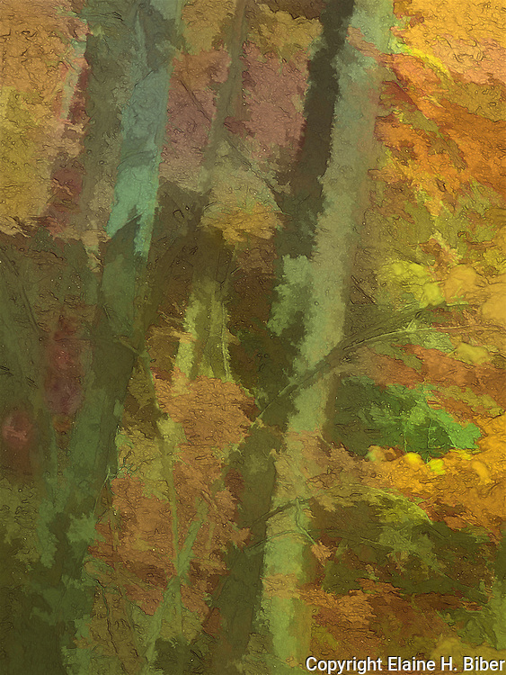 forest abstract