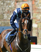 Accidental Agent ridden by Charles Bishop goes down to the start of The AJN Steelstock Sovereign Stakes  during Horse Racing at Salisbury Racecourse on 9th August 2020