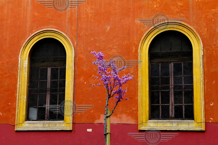 A tree in blossom outside a Roman house.
